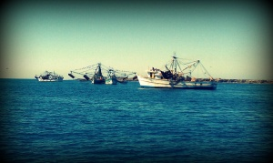 I LOVE Shrimp Boats!