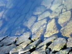 Rocks. Algae growth. Water. A cool pattern.