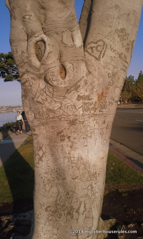 carved initials in a tree