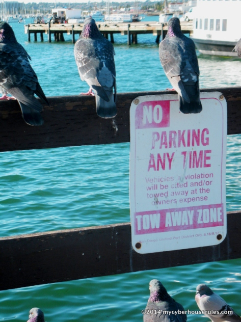 no parking except for the birds