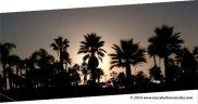 Sunset palmtree2